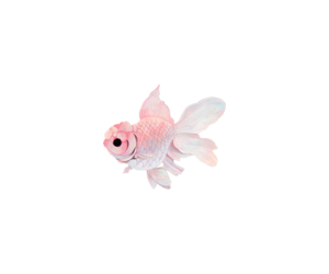 fish and pink image
