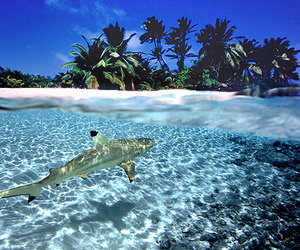 animal, beauty, and beach image