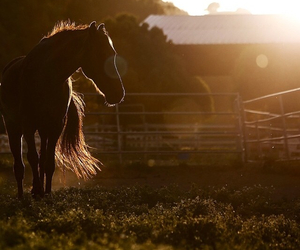 brown, horse, and sunset image