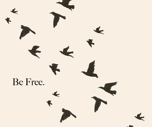 bird, free, and be free image
