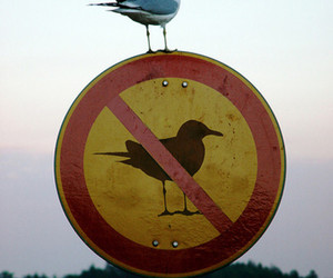 bird and sign image