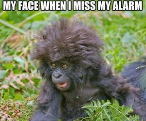 funny, alarm, and monkey image