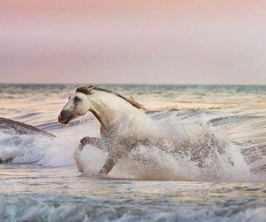 horse, power, and sea image