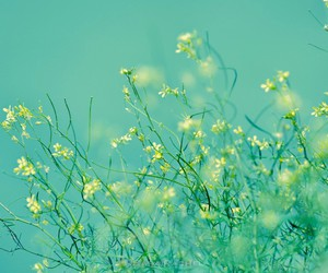 flowers and green image
