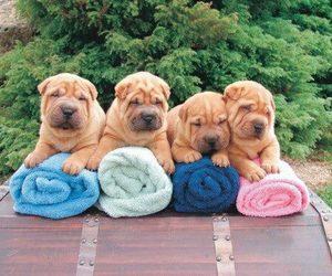 dog, puppy, and shar pei image