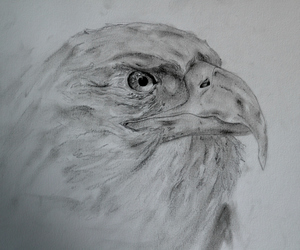 animals, creative, and drawing image