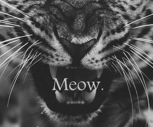 meow, wild, and roar image