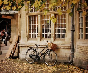 bike, autumn, and vintage image