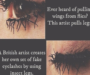 bugs, fake eyelashes, and weird image