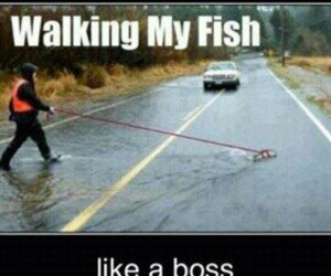 boss, fish, and funny image