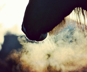 breathing, cold, and horse image