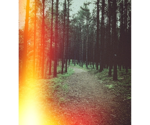 dark, forest, and tumblr image