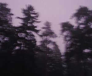 grunge, tree, and dark image