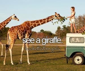 giraffe, animal, and safari image