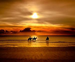 horse, sunset, and beach image