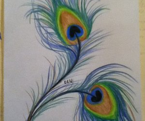 drawing and peacock image