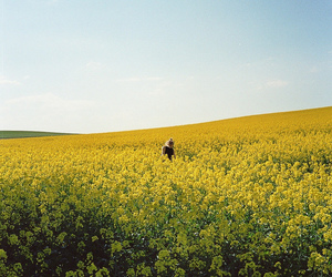 flowers, photography, and field image