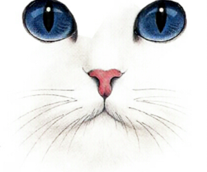 cat, blue, and art image