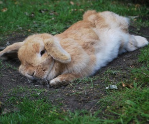 bunny, flop, and lop image