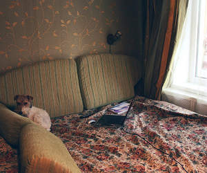 cozy, dog, and room image