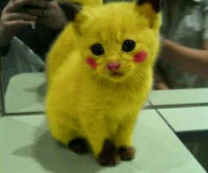 cats, pikachu, and yellow image