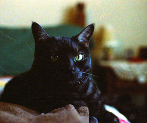 35mm, adorable, and animal image