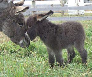 donkey and animal image