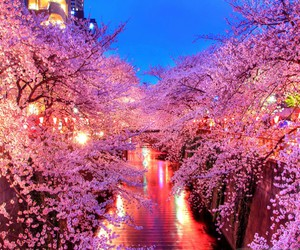 japan, spring, and pink image