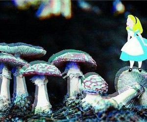 alice, drugs, and lsd image