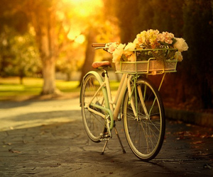 flowers, bicycle, and bike image