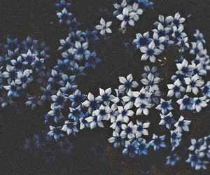 flowers, blue, and dark image