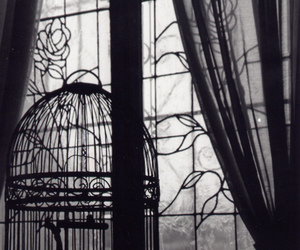 black and white, cage, and photography image