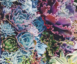 nature, plants, and flowers image