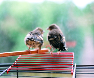 vintage, animal, and bird image