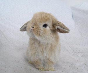 cute, bunny, and animal image