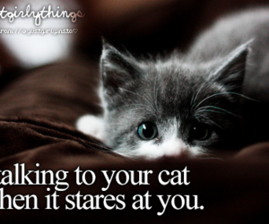 cat, cute, and just girly things image