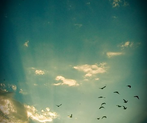 sky, bird, and sun image
