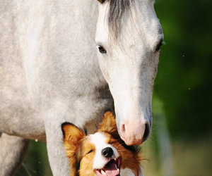 dog, horse, and WITH image