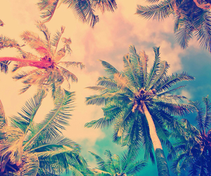 wallpaper, summer, and palm trees image