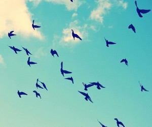 bird, clouds, and free image