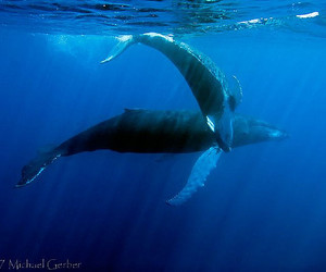beautiful, underwater, and whales image