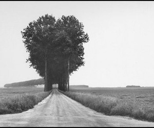 tree, black and white, and photography image