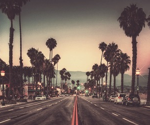 summer, palm trees, and road image