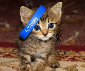 blue, cats, and puppy image