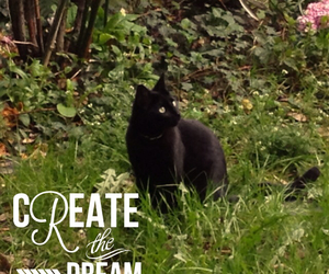 cat, garden, and Dream image