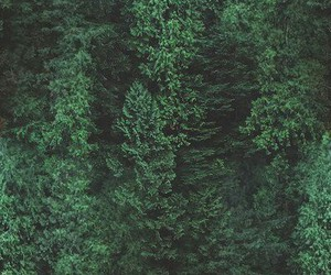 forest, nature, and background image