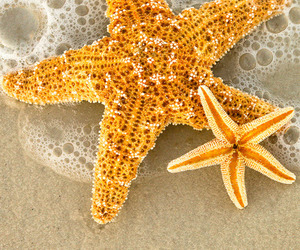 starfish, beach, and sea image