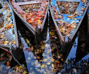 leaves, boat, and autumn image