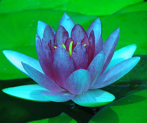 117 Images About The Lotus Flower On We Heart It See More