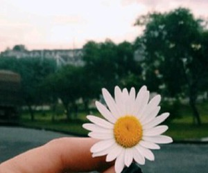 cool, daisy, and flower image